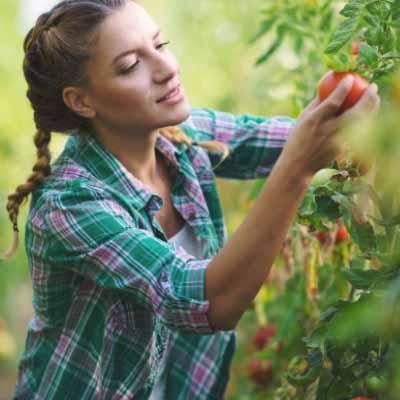 καλλιέργησε τα δικά σου λαχανικά!