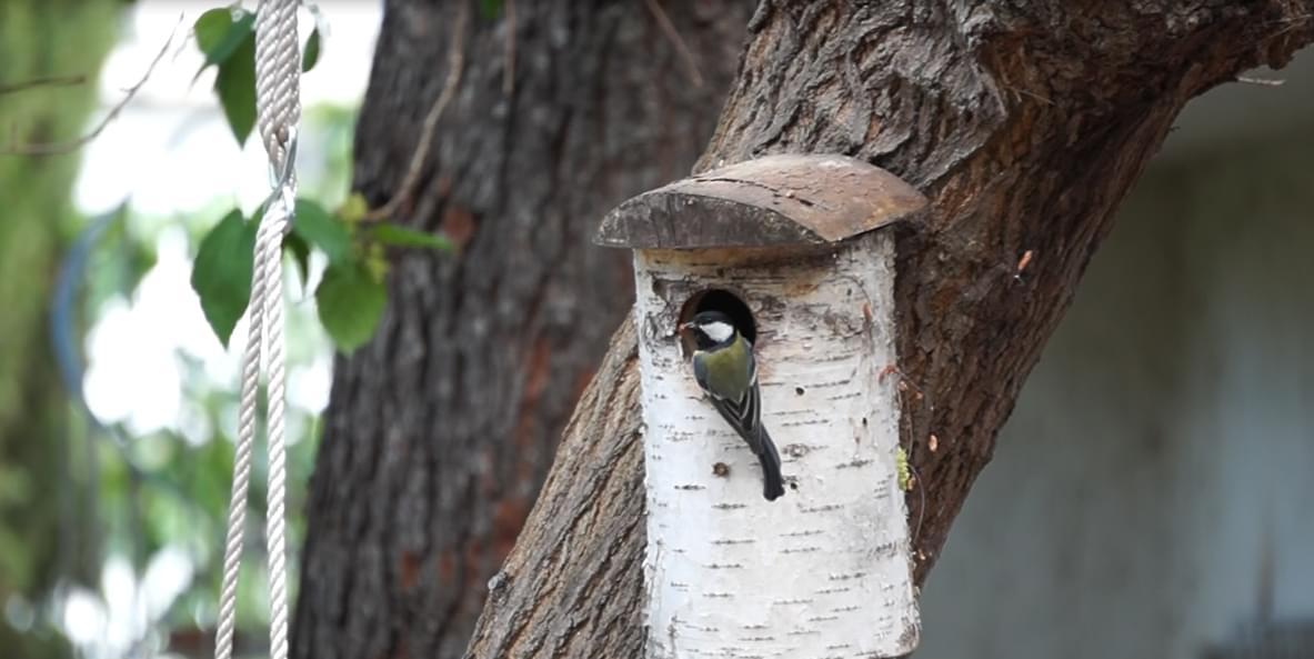 σουσουράδες - bird nest box