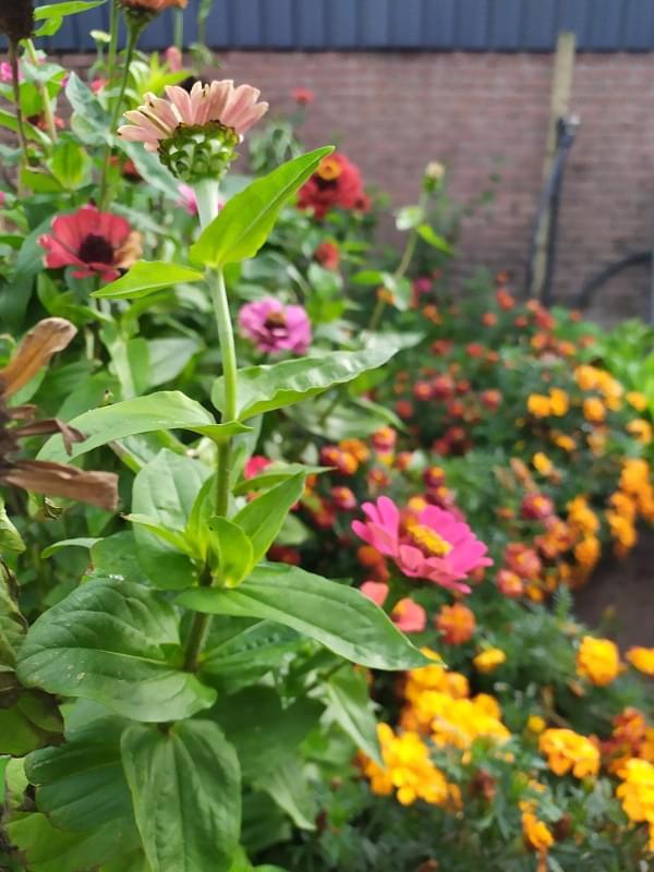 Καλοκαιρινά φυτά στον κήπο(διαβάσαμε στο Garden Magazine)